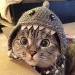 Katt som kjører på støvsuger i drakt :)